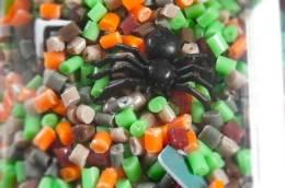 find-it-eww-gross-spider-P1160246
